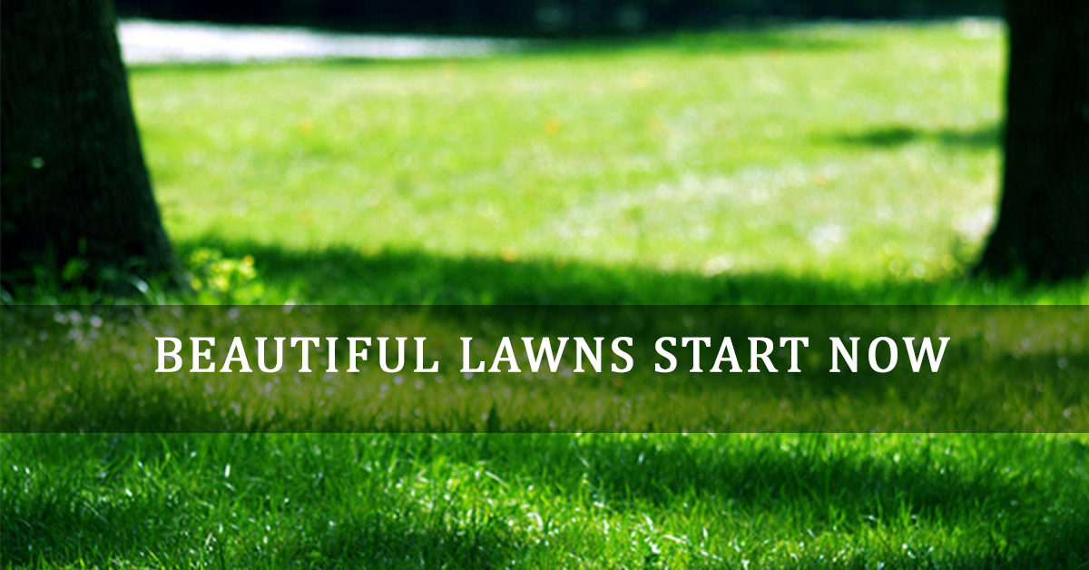 photos of beautiful summer lawns